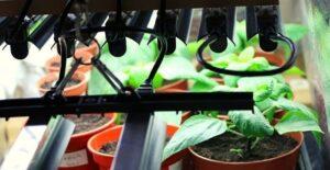 benefits of using LED grow lights